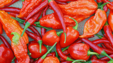 Interesting Facts about Chili Peppers