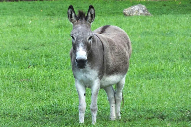 Forced to walk in public with a donkey and an apology sign