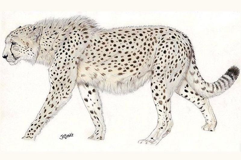 Giant Cheetah
