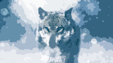 Interesting Facts About Wolves