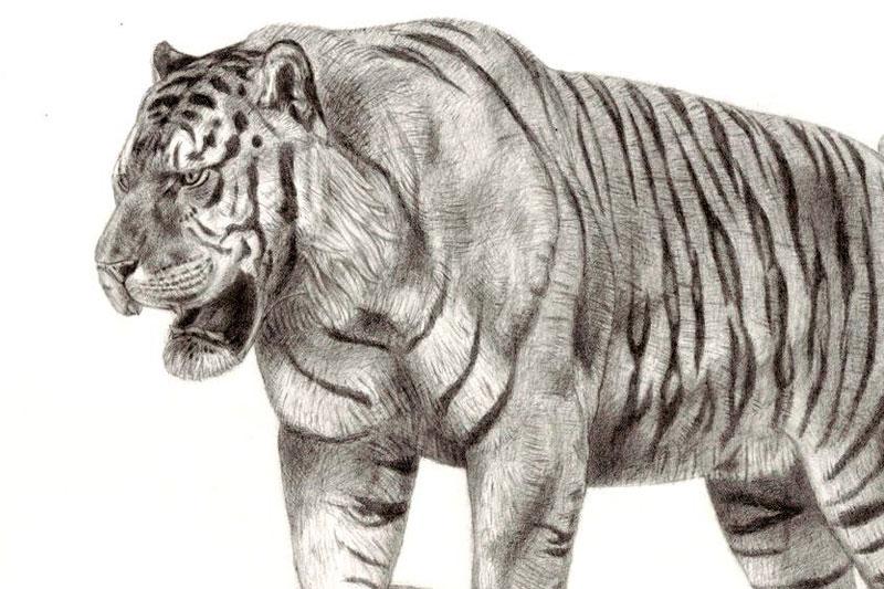 Pleistocene tiger