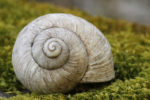 Some desert snails have been known to sleep for three to four years.