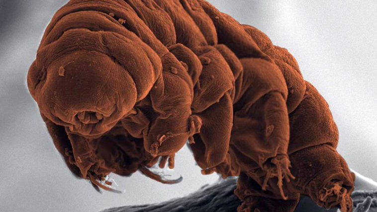 Tardigrade Animals who live forever