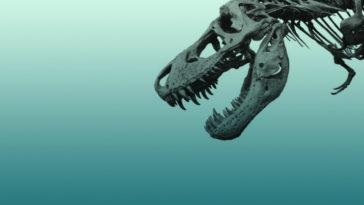 Top 6 amazing Dinosaurs