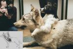Vladimir Demikhov - Frankenstein dogs