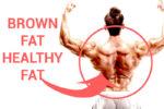Brown fat Healthy fat