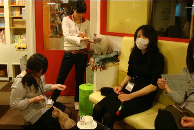 Most Interesting Restaurants Calico Cat Cafe, Tokyo