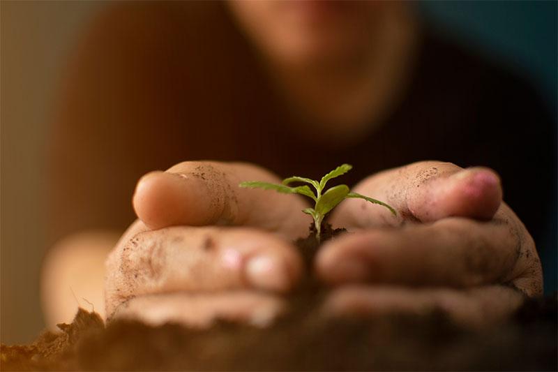 Seeds Grow Indoors
