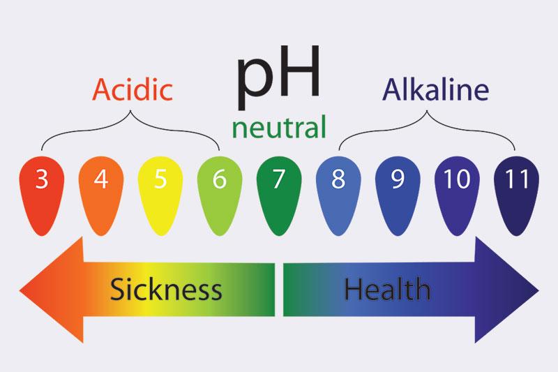 Balances the body's pH levels