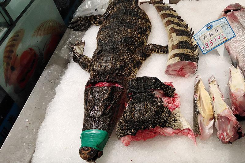 Walmart Selling Crocodiles