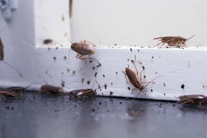Everyone hates cockroaches