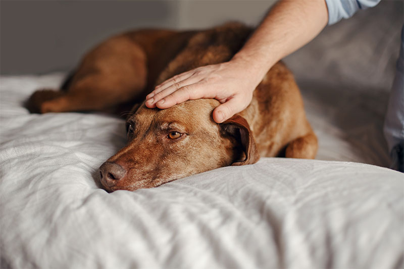 Petting your dog's head