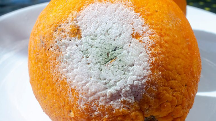 12 Secret Signs Your Produce Has Gone Bad