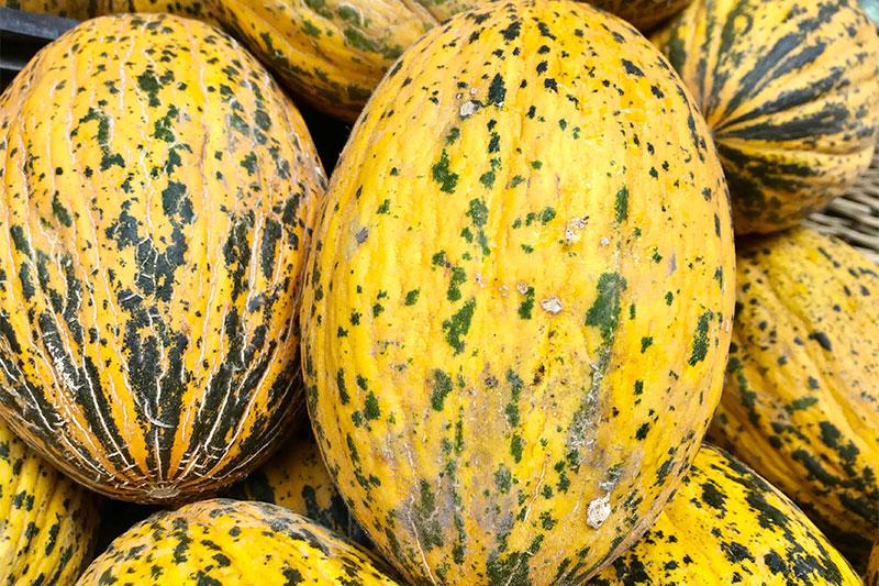 Melons aren't hollow