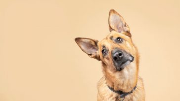 12 Bad Things You Do to Your Dog Unintentionally