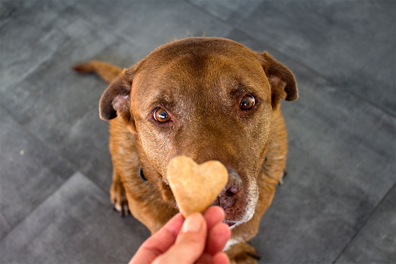 Giving in to your dog's begging