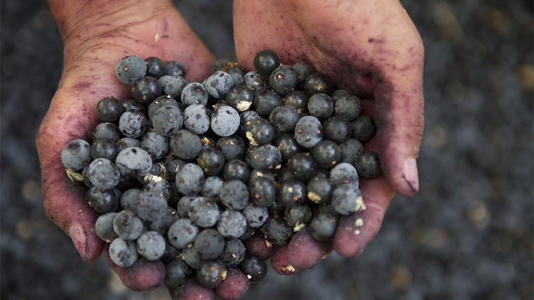 Health Benefits Of Acai Berries You May Not Know