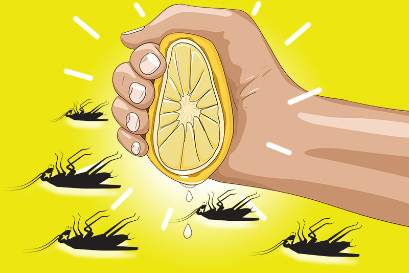 Simple And Easy Tips To Get Rid Of Common Pests That Invade Your Homes