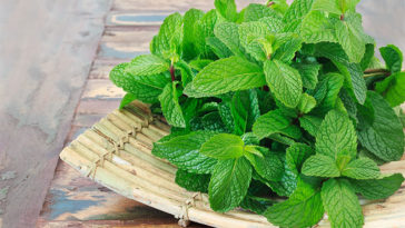 facts about mint