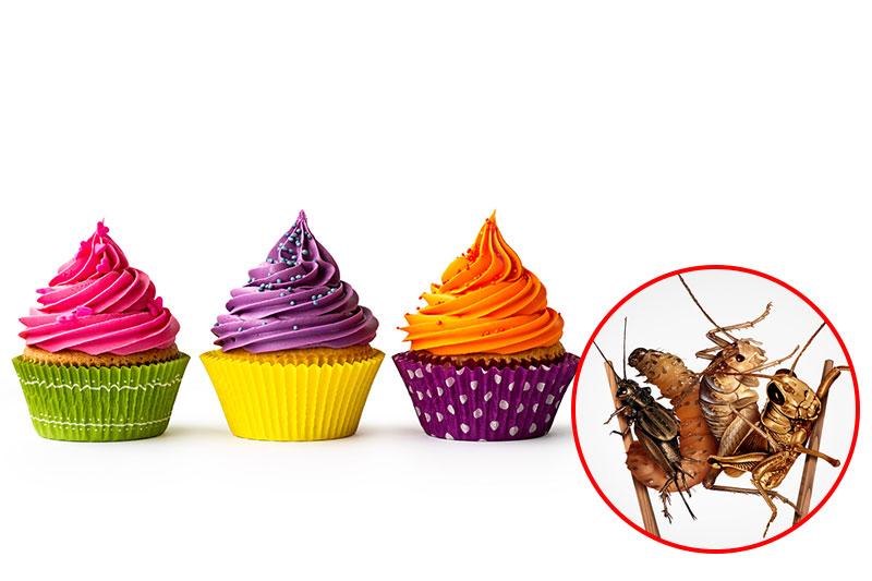 Food Coloring Is Made By Shells Of Insects