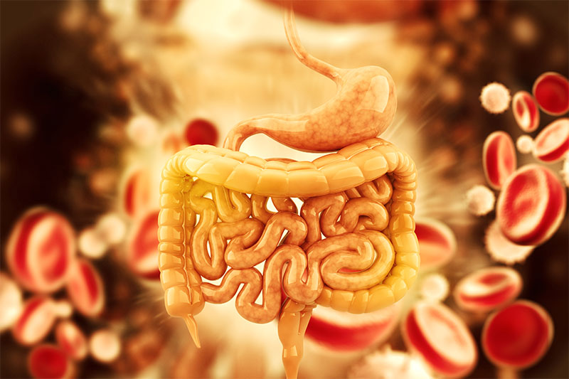 Your Digestive System Gets Moving