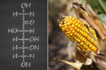 10 Reasons Why High Fructose Corn Syrup is Dangerous for Your Health