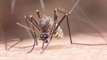 7 Reasons Why Mosquitoes Are Attracted to You, According to Science