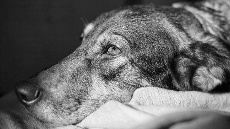 12 Warning Signs Of Cancer In Dogs That Every Owner Should Know